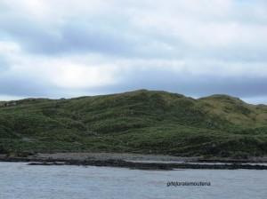 Prion Island, Georgie du Sud.