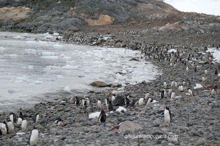 Antarctique, Ile Cuverville 20.03.2017.